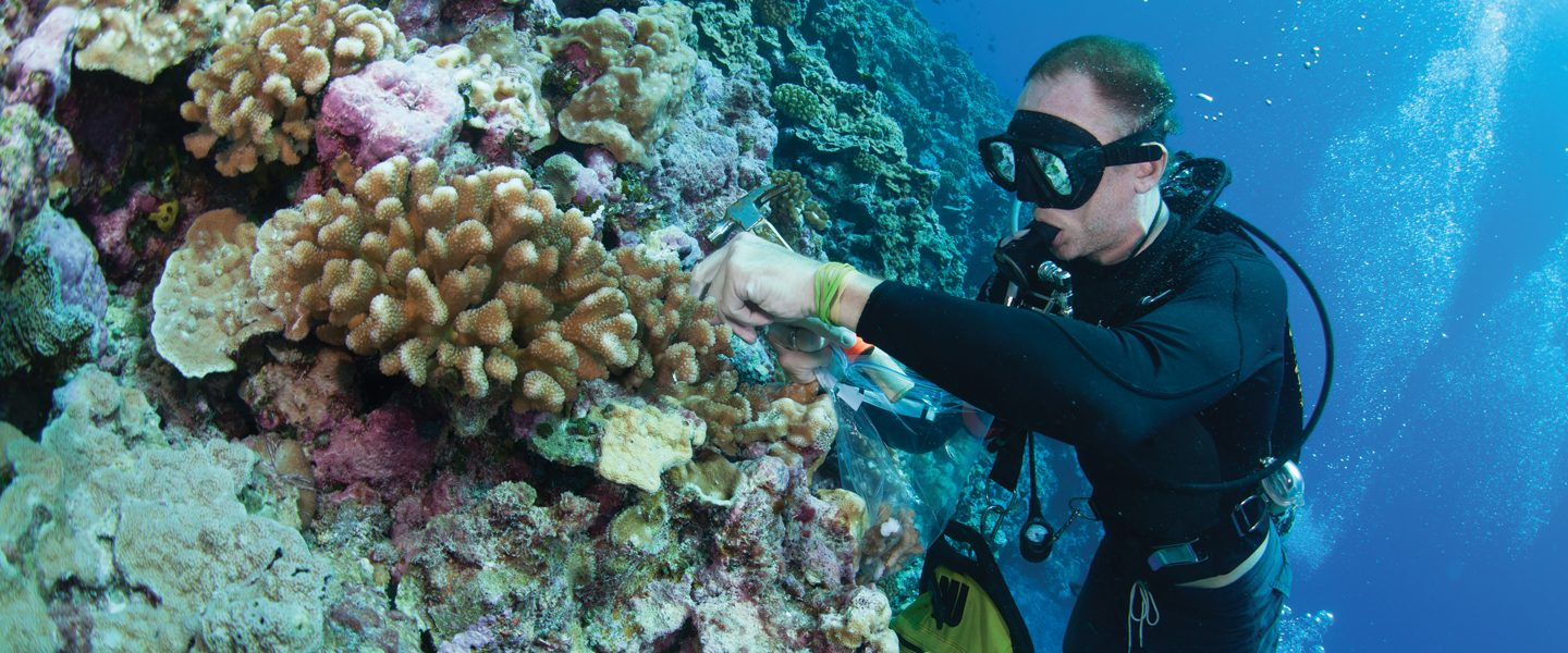 scuba diver removes small coral sample for research