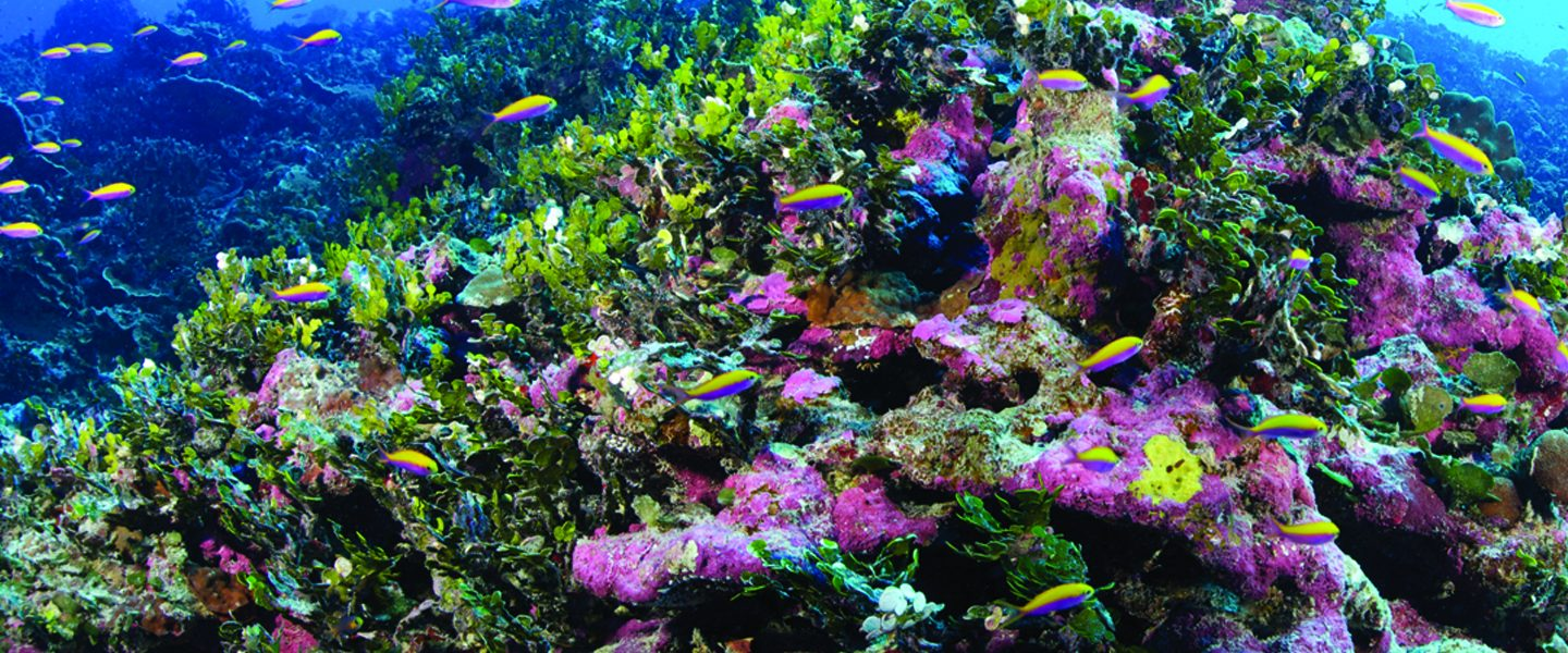 closeup of a colorful coral reef
