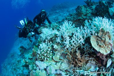 divers in PIPA