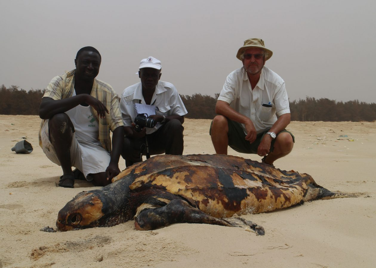 scientists crouch on beach near dead turtle