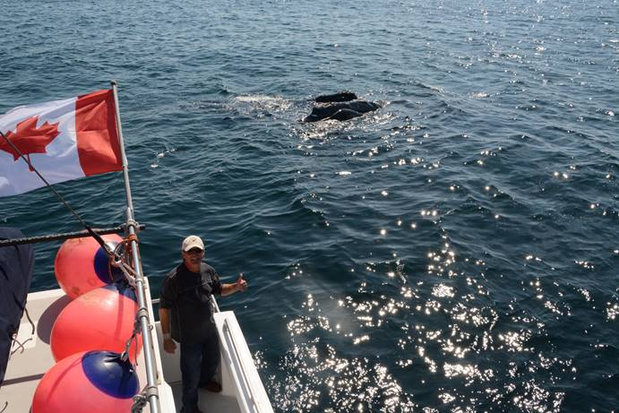 joe howlett with a right whale and calf in background