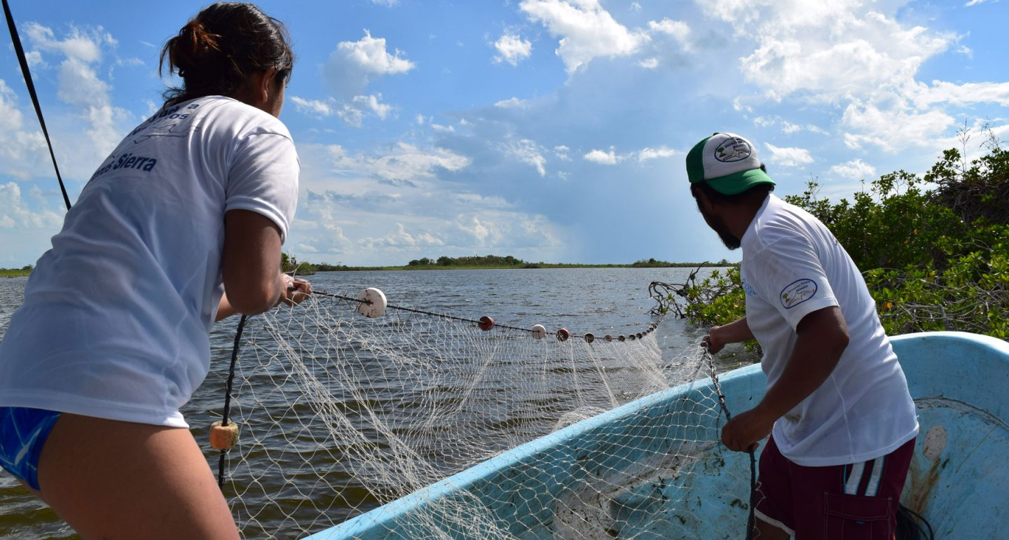 researchers pulling net