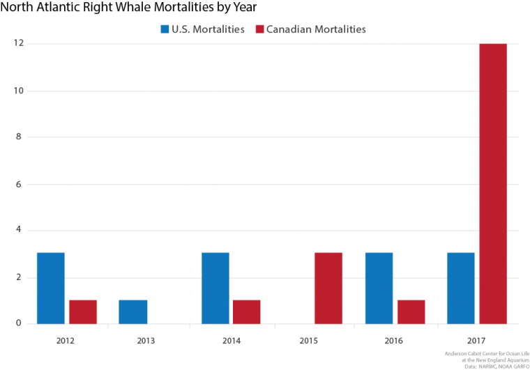 North Atlantic right whale mortalities in the U.S. and Canada by year. 2017 was an unprecedented year with 15 reported whale deaths.