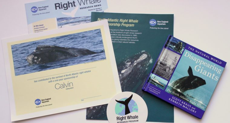 right whale publications