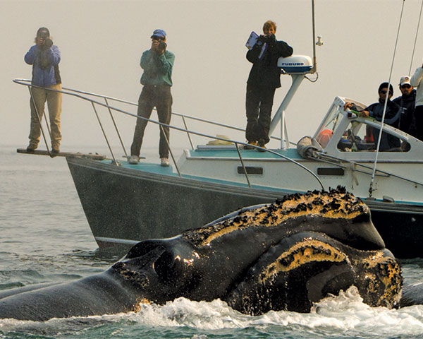 [IMG] Right whale researchers take photos of a whale from a boat.