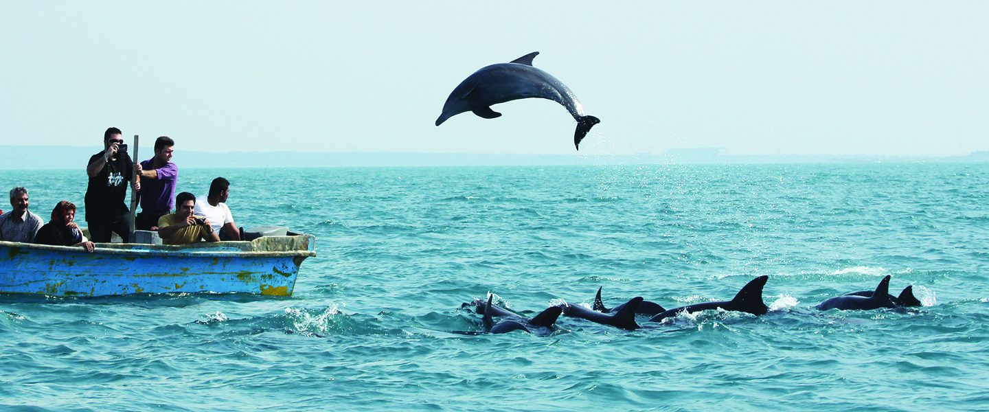 [IMG] A dolphin jumps out of the water next to a boat.
