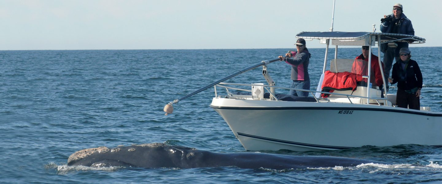 researchers in boat collect breath sample from whale
