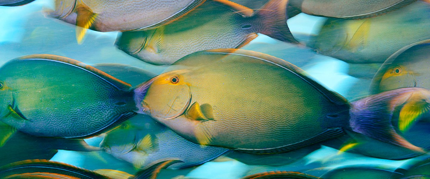 colorful fish schooling