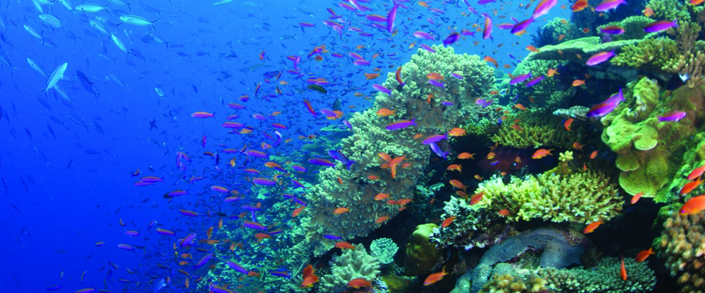 hundreds of little tropical fish school over corals