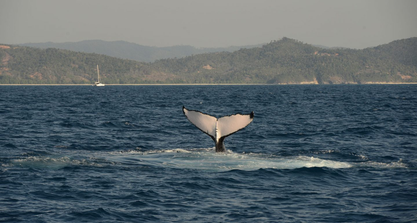 humpback whale fluke with mountains in backgroun