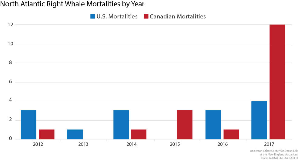 North Atlantic right whale mortalities in the U.S. and Canada by year.