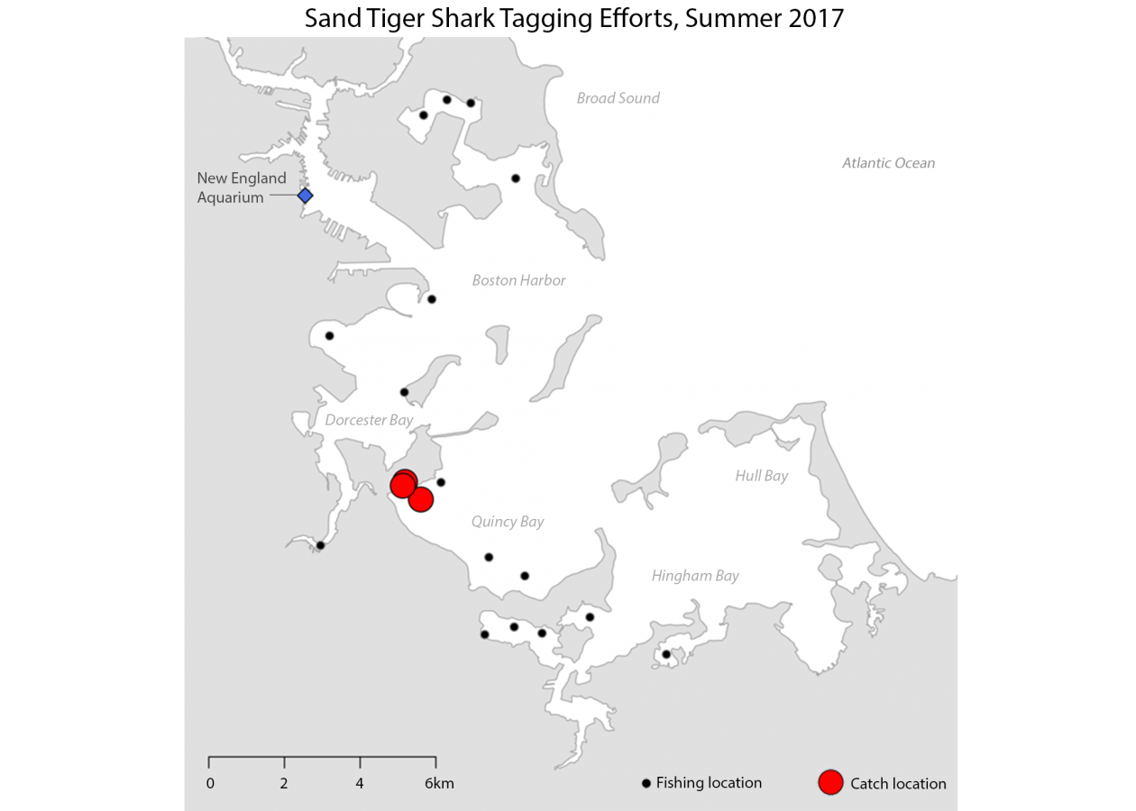 A map of sand tiger shark tagging efforts in Boston Harbor in summer 2017.