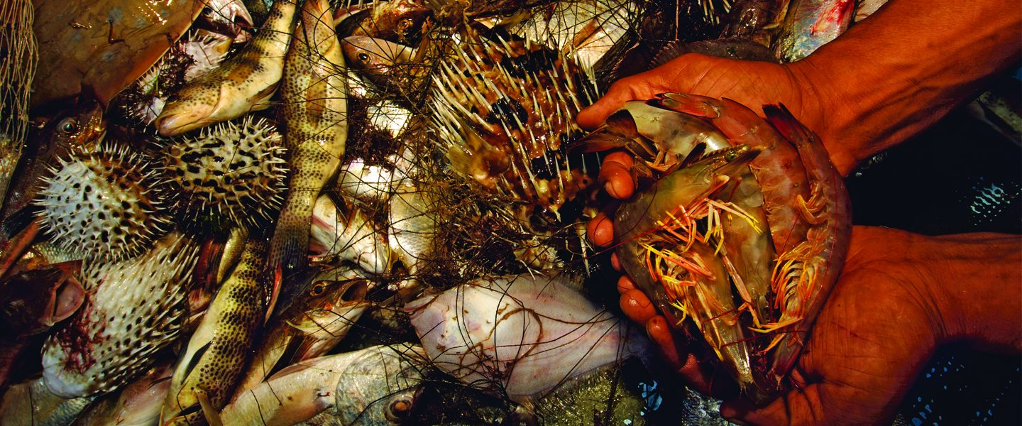 [IMG] Hands hold shrimp next to bycatch.