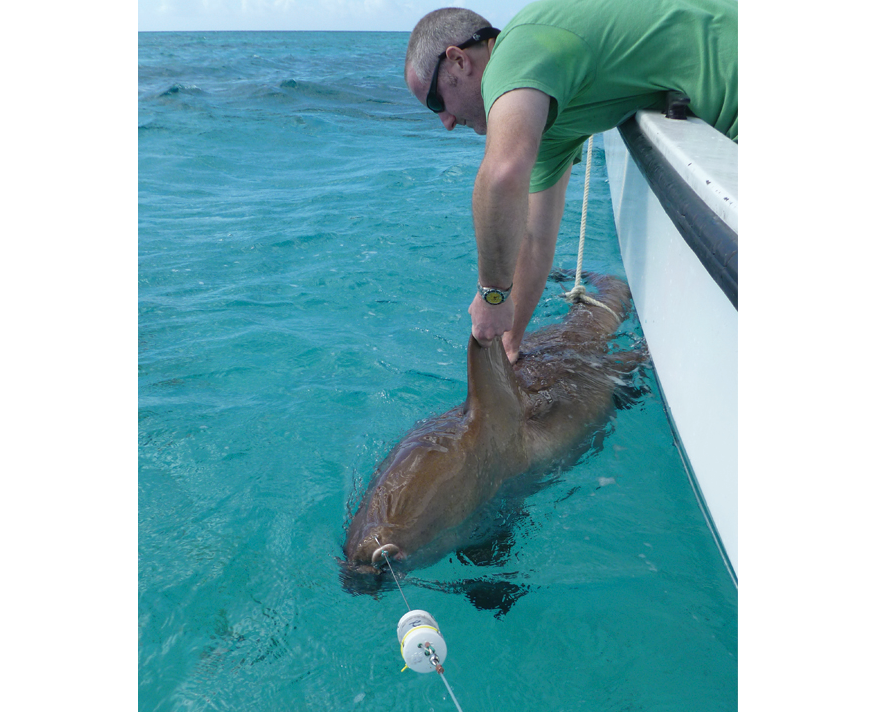 [IMG] Anderson Cabot Center VP John Mandelman releases a tagged shark back into the water.