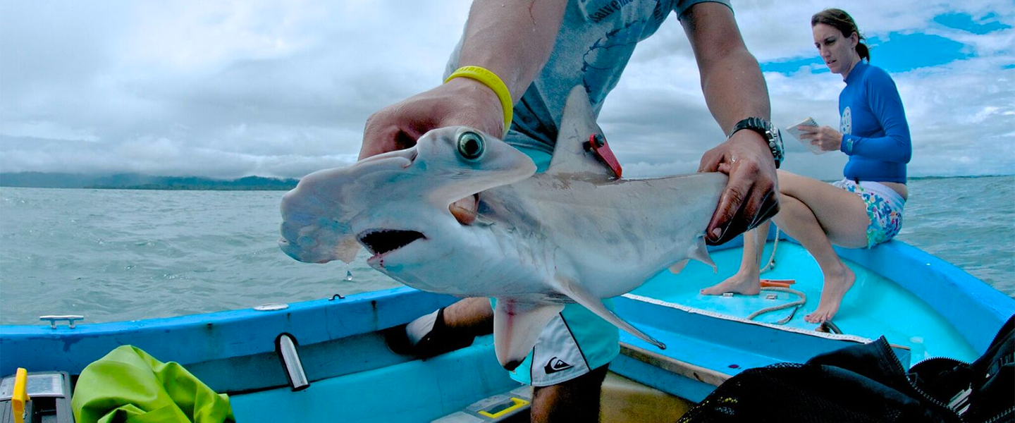 [IMG] MCAF Fellow holds hammerhead shark. Photo Courtesy: David Garcia, Misión Tiburón.