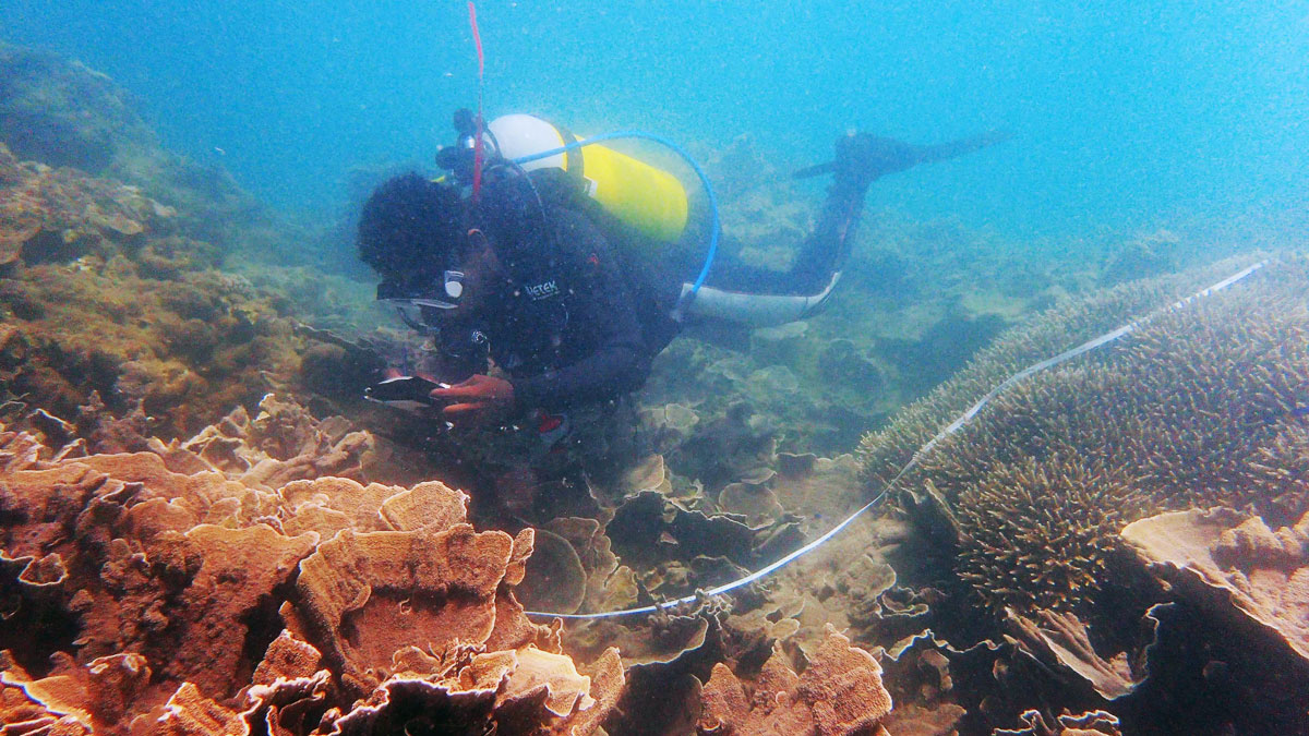 [IMG] Aristide Laha recording coral species along the transect line.