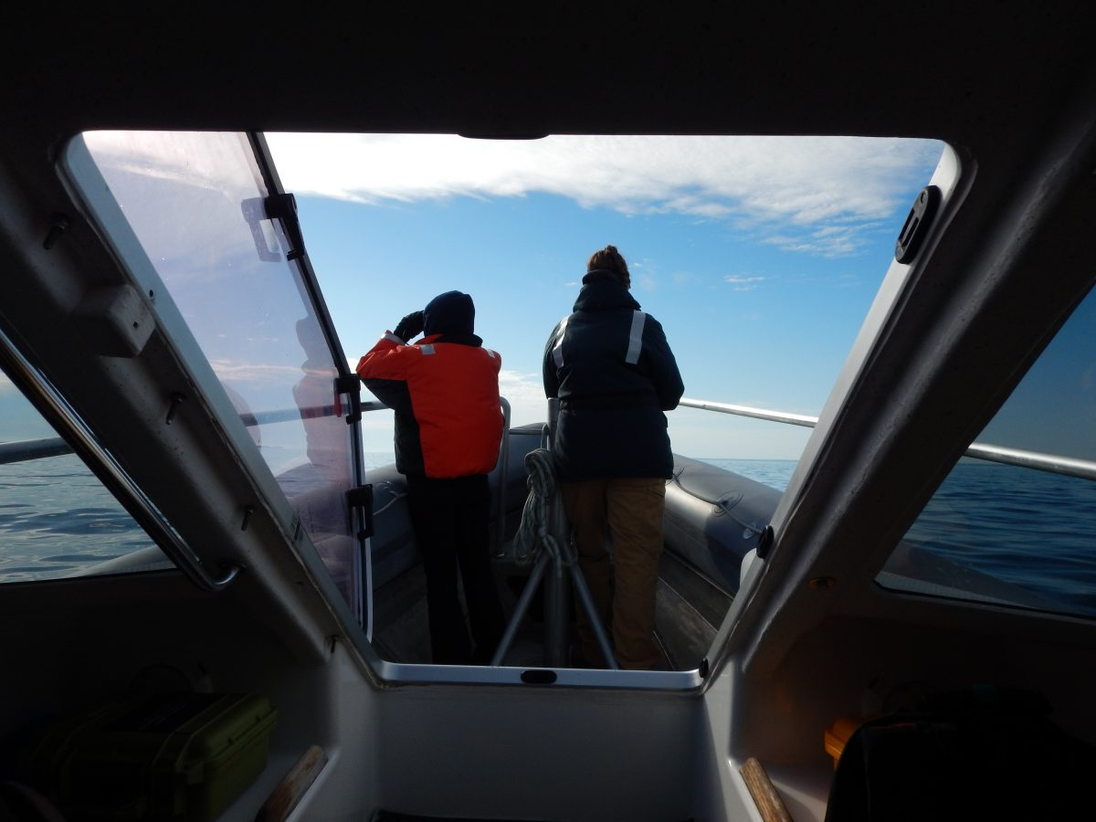 Looking out at our observers on the bow of the Odyssey.