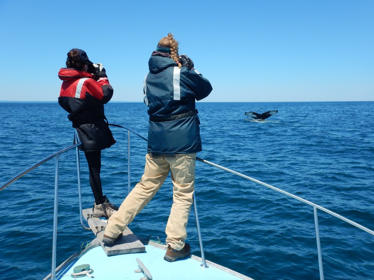scientists on boat photograph humpback in the distance.