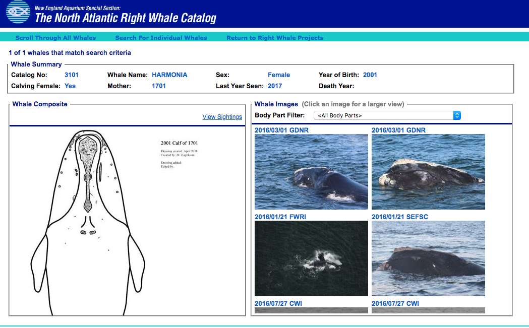 Right Whale Catalog entry for Harmonia.