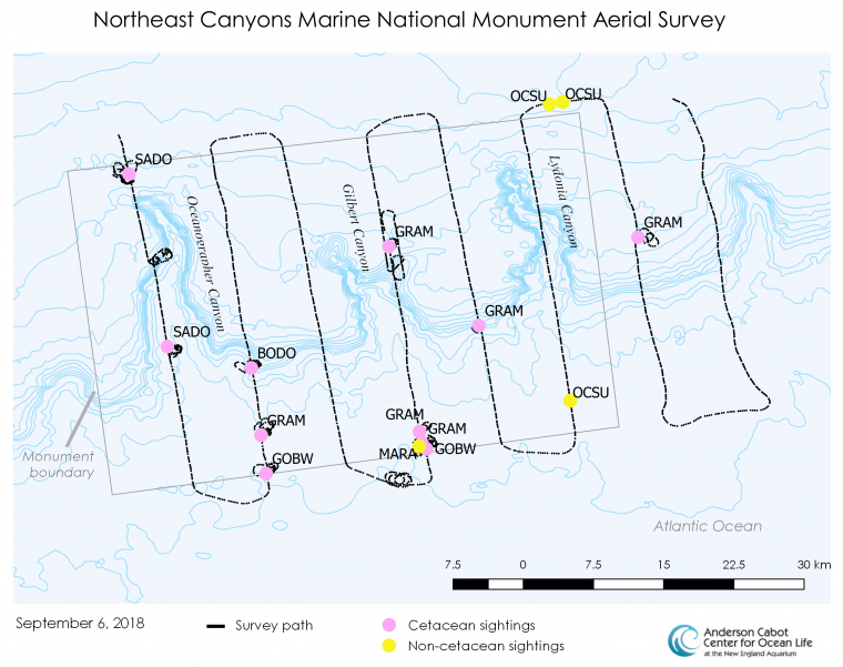 A map of animal sightings on the September 6, 2018 aerial survey of the monument.