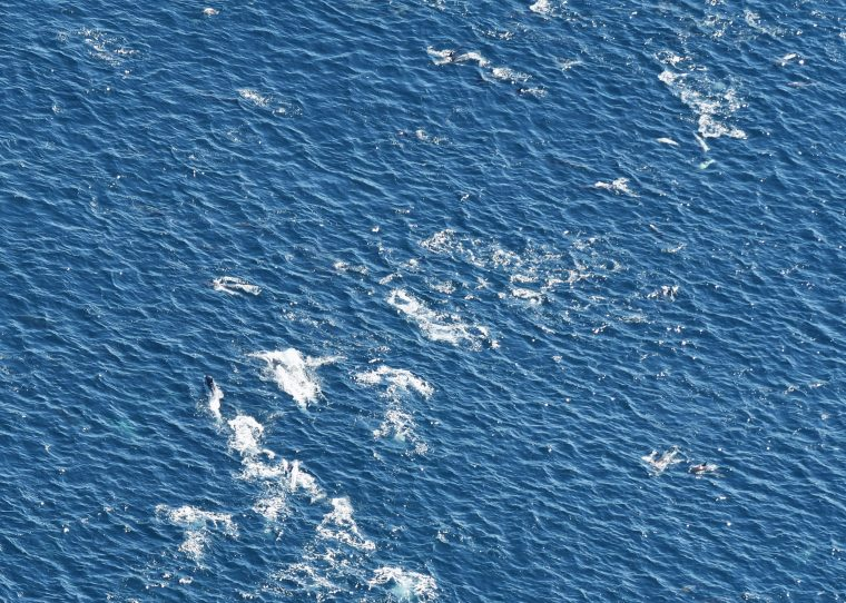 A superpod of approximately 250 common dolphins spotted in the Northeast Canyons and Seamounts Marine National Monument.