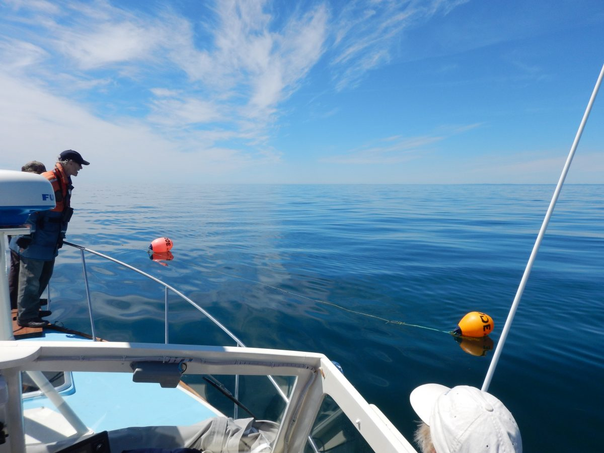 Inspecting some fishing gear left in the shipping lanes. Photo credit: Kelsey Howe / NEAq.