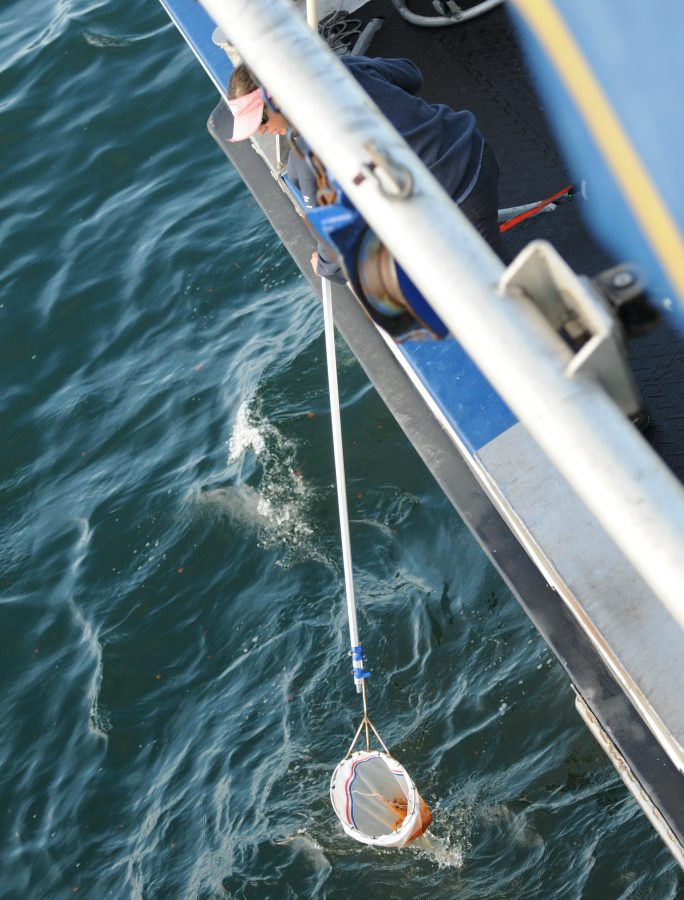 a net at the end of a pole is used to scoop whale poop