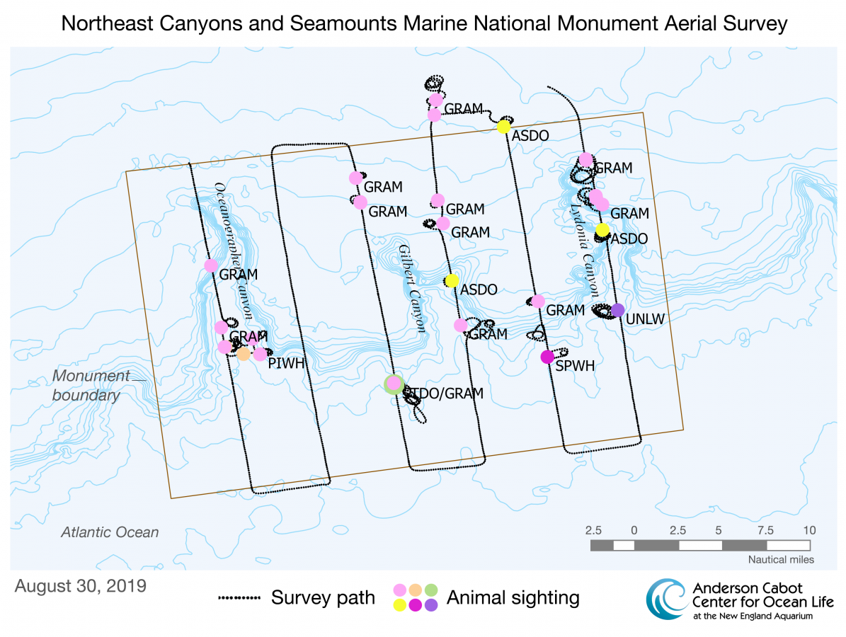 Aug. 30 2019 aerial survey of Northeast Canyons and Seamounts Marine National Monument