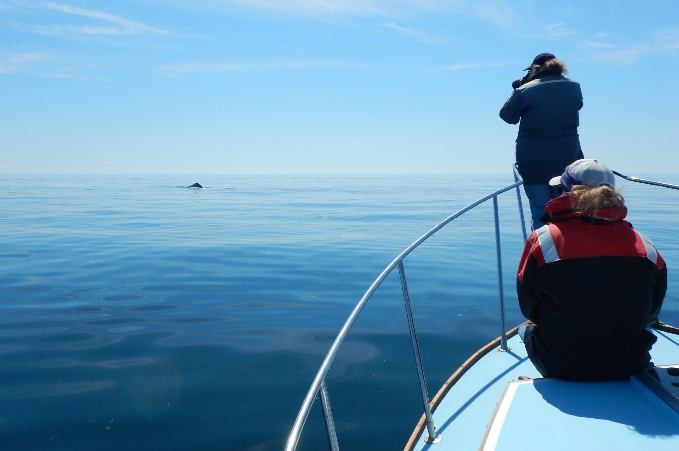 Photographing a humpback whale