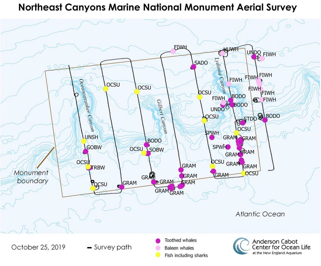Northeast Canyons Marine National Monument Aerial Survey Plot