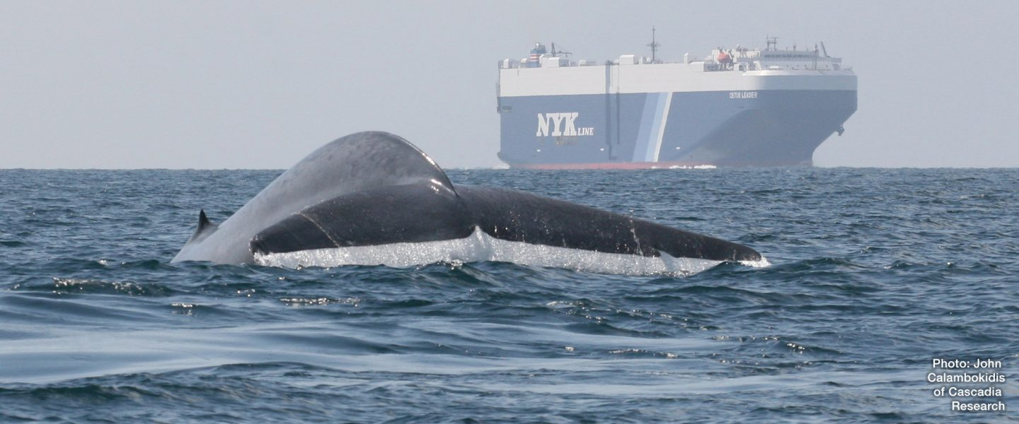 a whale appears in the ocean near a large ship