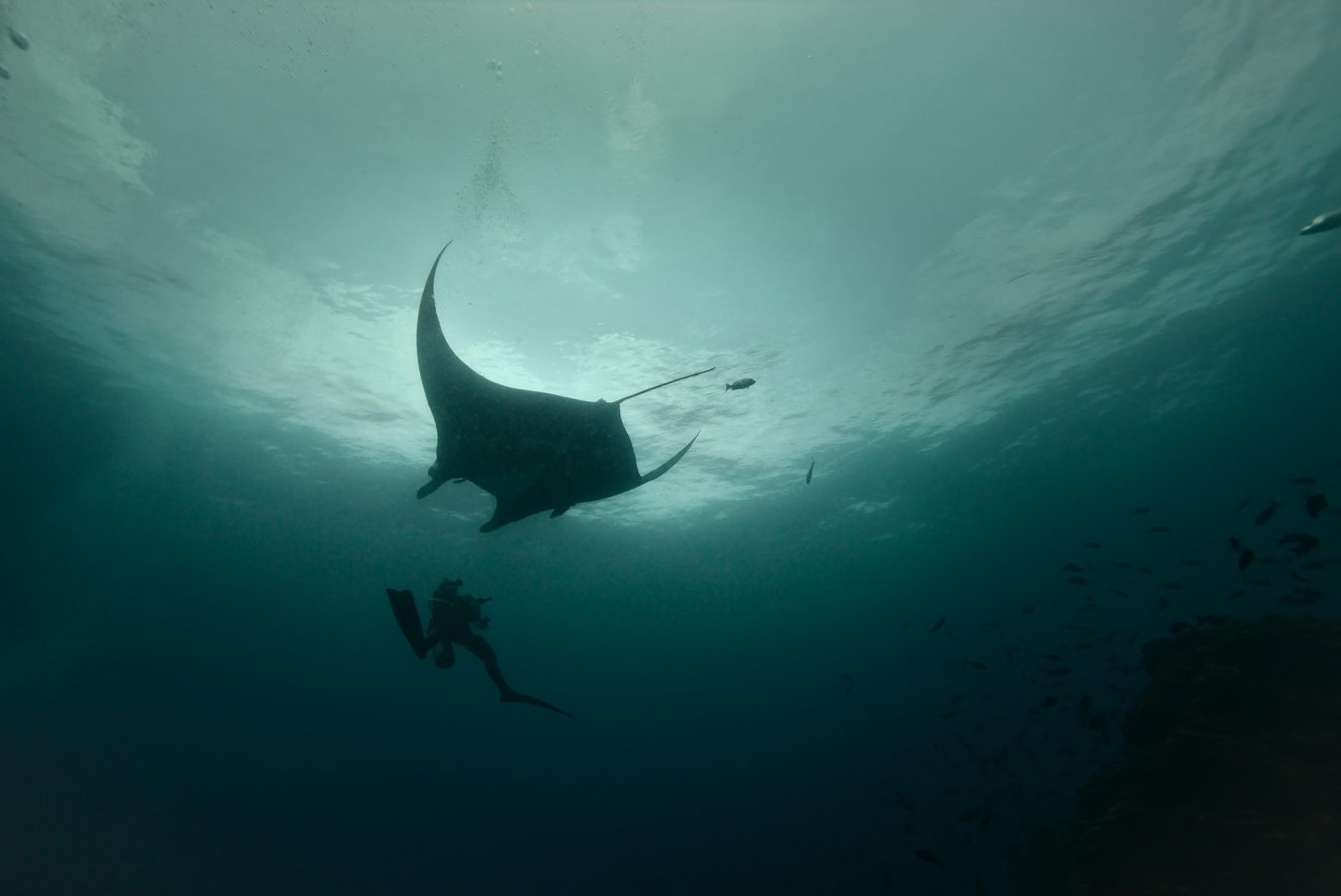 Diver underwater with manta ray